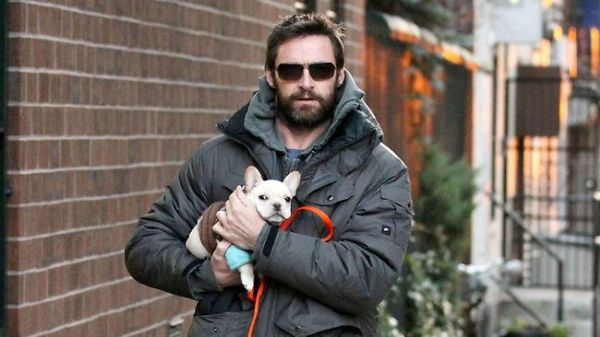 Hugh Jackman Gay bullddog